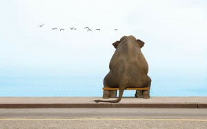 animals alone elephant