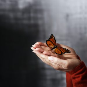 Hands Holding Butterfly